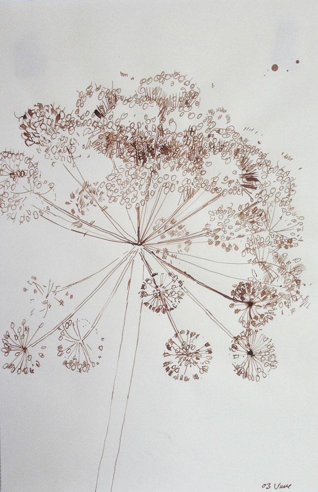 <p>Angelica Study II, ink, 25 x 18cm</p>
