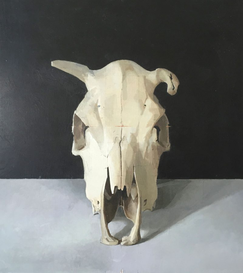 Cow Skull, Front View, oil, 43 x 38cm