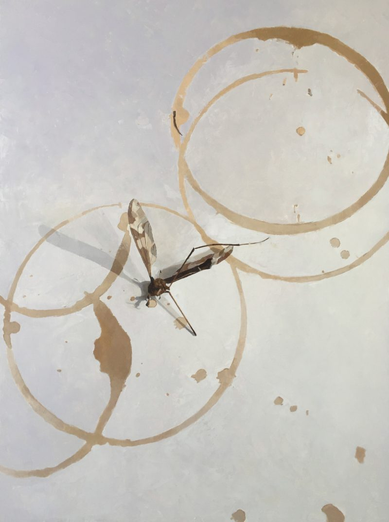 Cranefly and Coffee Rings, oil, 61 x 46cm
