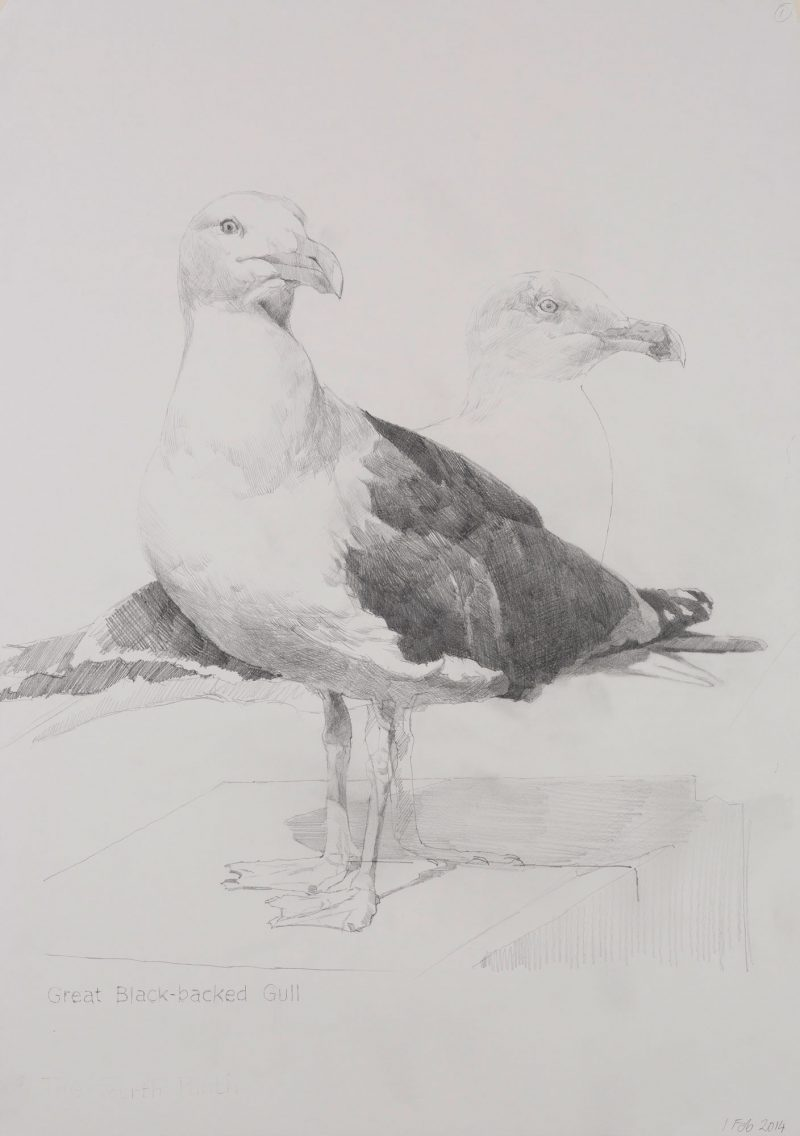 <p>Great Black-Backed Gull, pencil, 62 x 48cm</p>