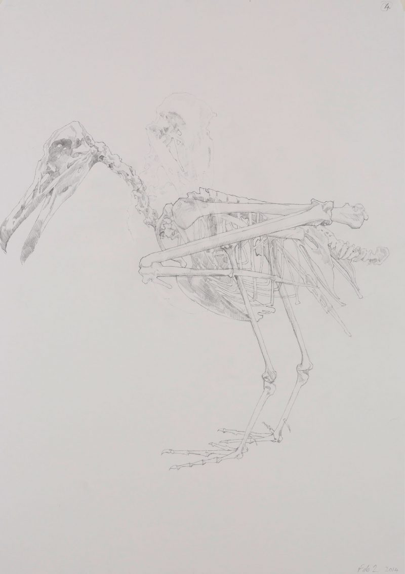 <p>Gull Skeleton 1, pencil, 62 x 48cm</p>