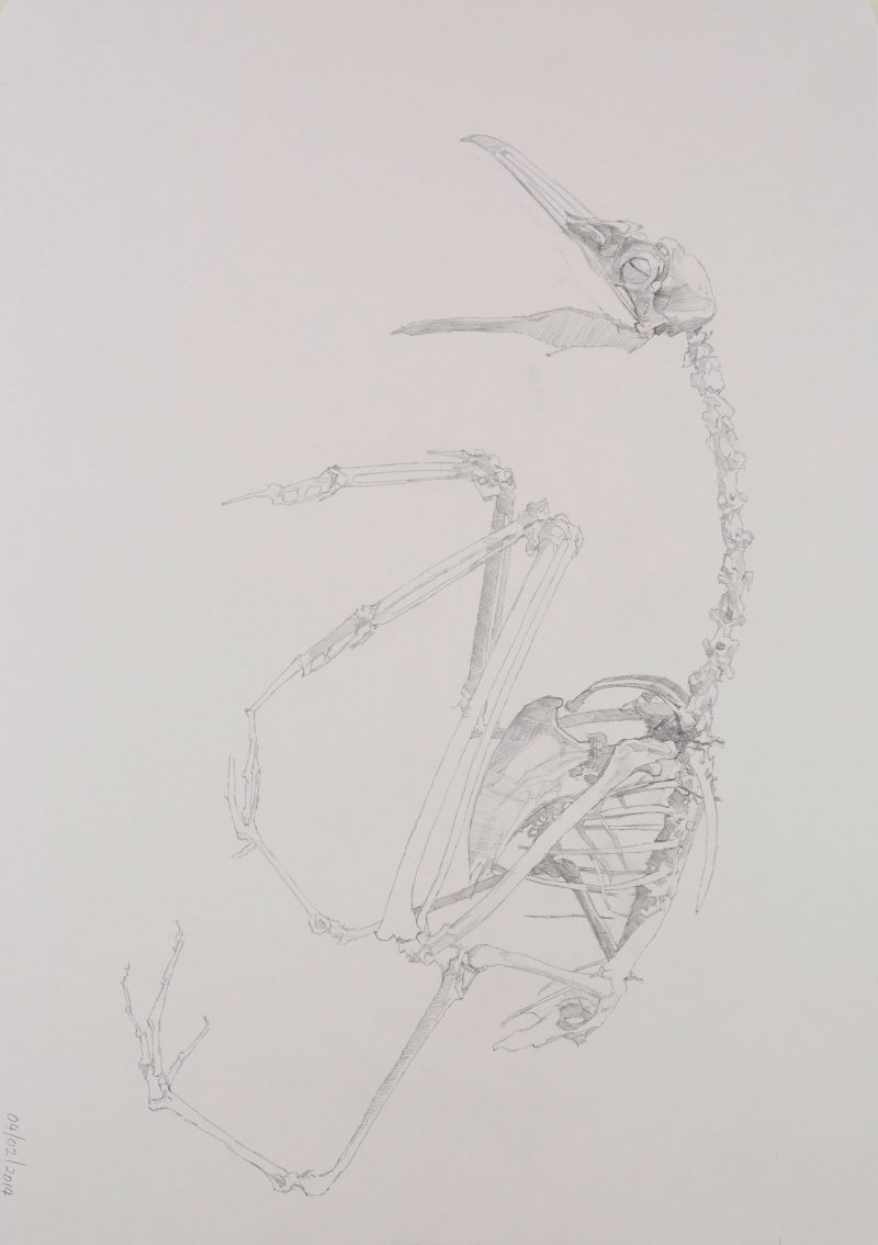 <p>Gull Skeleton 11, pencil, 62 x 48cm</p>