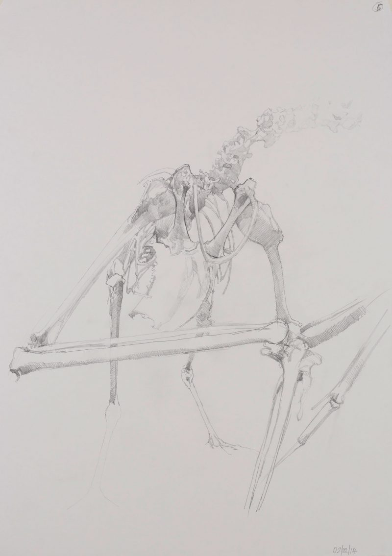<p>Gull Skeleton 111, pencil, 62 x 48cm</p>