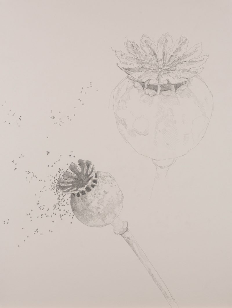 <p>Nature Table, Poppy Seeds, pencil, 64 x 48cm</p>