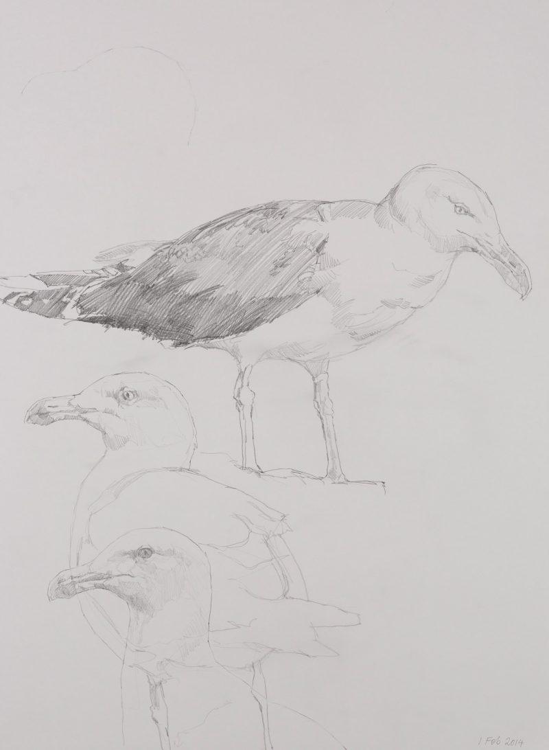 <p>Seagull Study, pencil, 62 x 48cm</p>