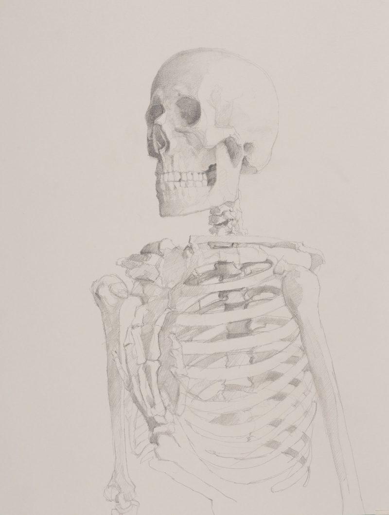 <p>Vanitas portrait II, pencil, 39 x 32cm</p>
