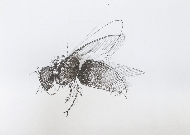 <p>Wasp, ink, 15 x 20cm</p>