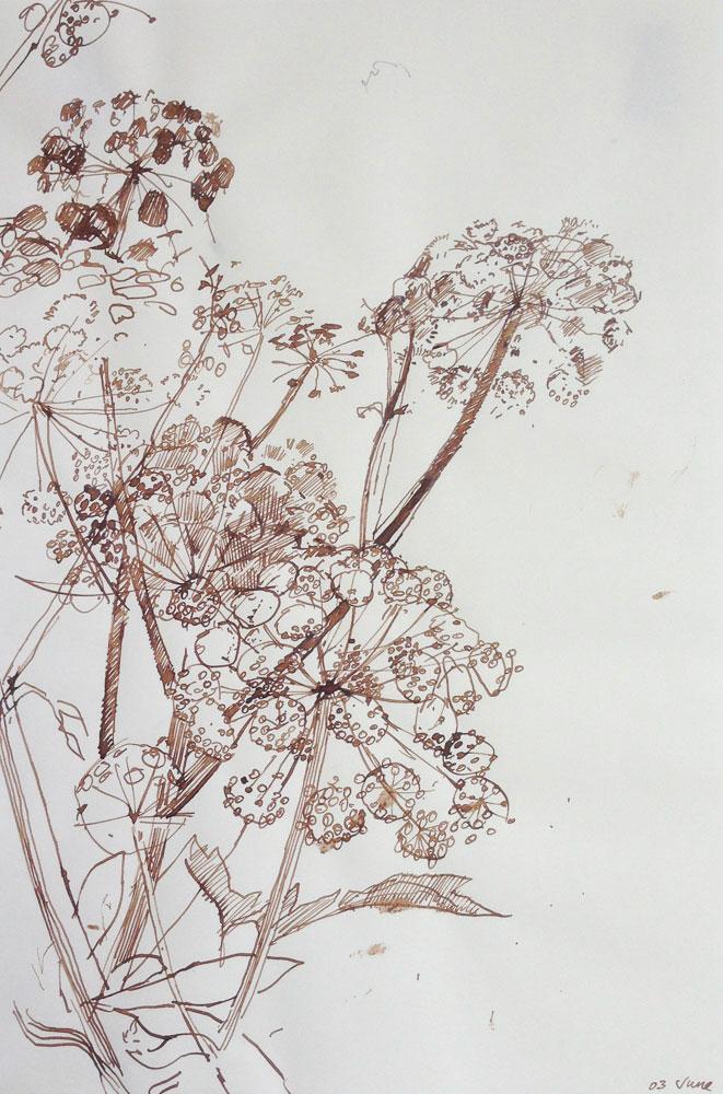 <p>Angelica Study I, ink, 25 x 18cm</p>