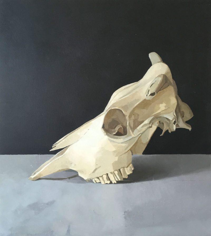 Cow Skull, Profile, oil, 43 x 38cm