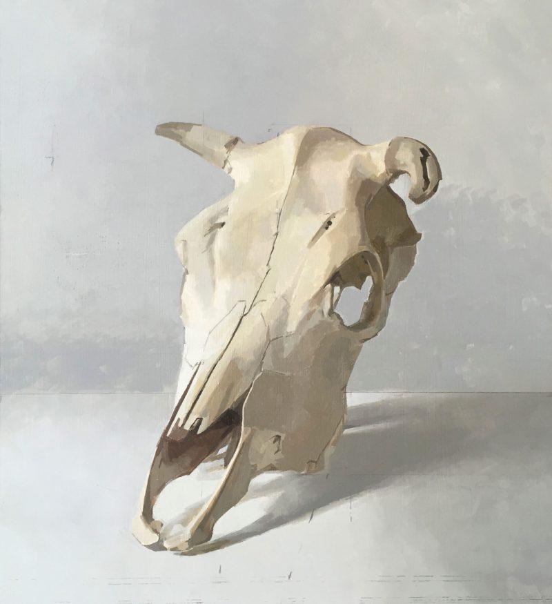 Cow Skull, Three Quarter View, oil, 43 x 38cm