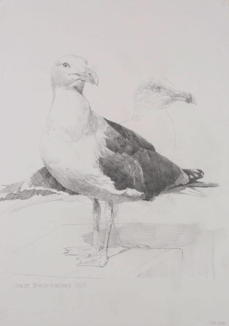 <p>Great Black-Backed Gull, pencil, 62 x 48cm</p>