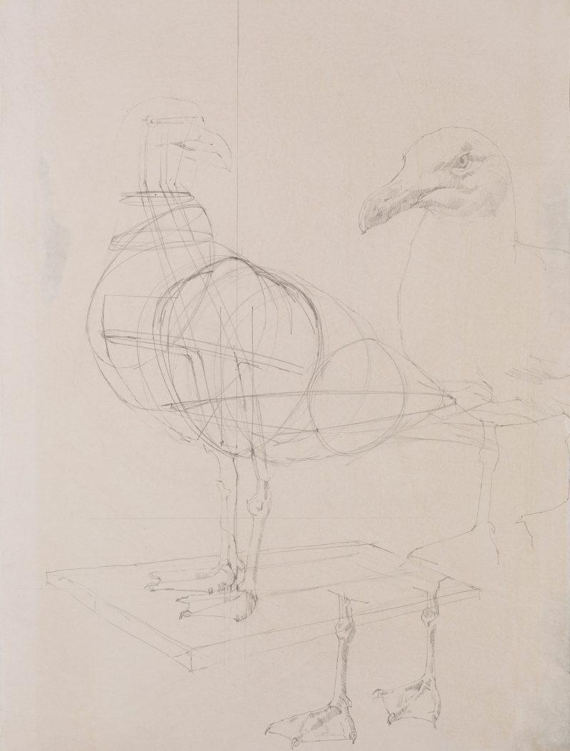 <p>Gull Armature, pencil, 62 x 48cm</p>