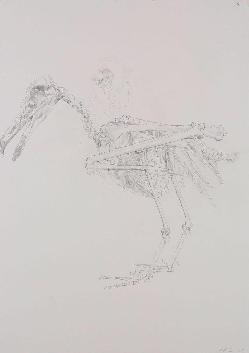 <p>Gull Skeleton 1, pencil, 62 x 48cm</p>
