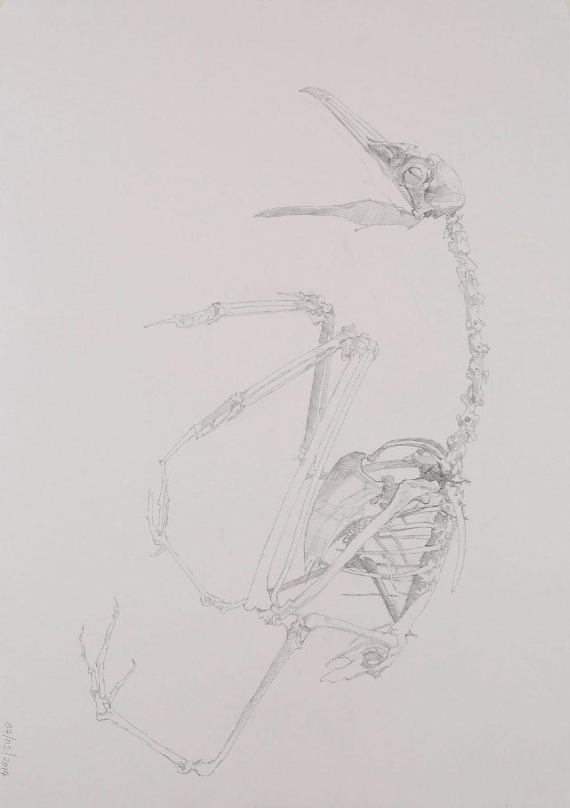 <p>Gull Skeleton 11, pencil, 62 x 48cm</p>